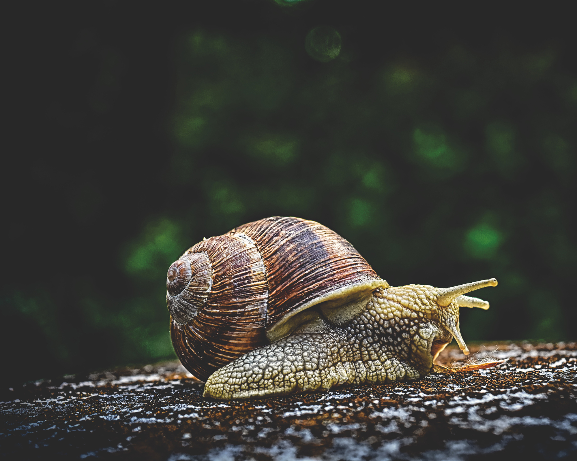 Important Lessons Authorpreneurs Can Learn from a Snail: Part 1