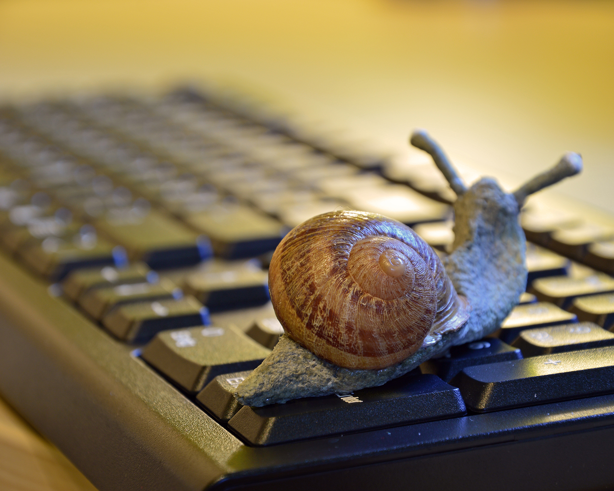 Important Lessons Authorpreneurs Can Learn from a Snail: Part 2